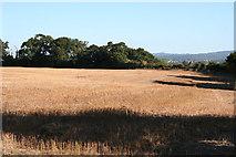 ST1926 : Norton Fitzwarren: Bronze Age enclosure, Iron Age hill fort by Martin Bodman