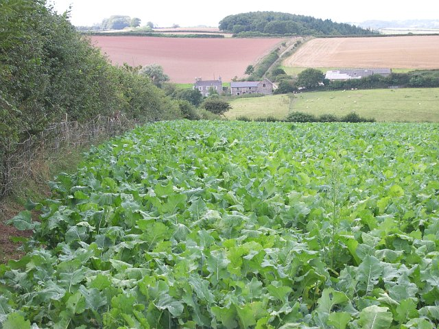 Mixed Agriculture near Crebar Farm