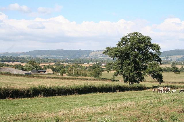 Norton Fitzwarren: view north to the Quantocks