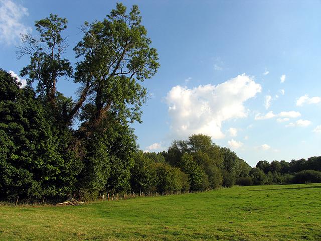 Pasture near Hamstead Marshall