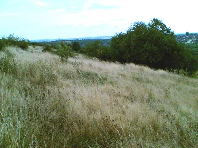 Shirebrook Nature Reserve