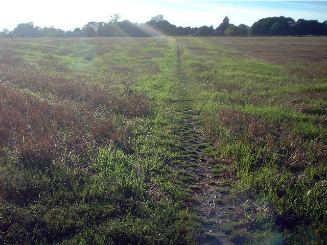 Footpath between Dean and Sparsholt