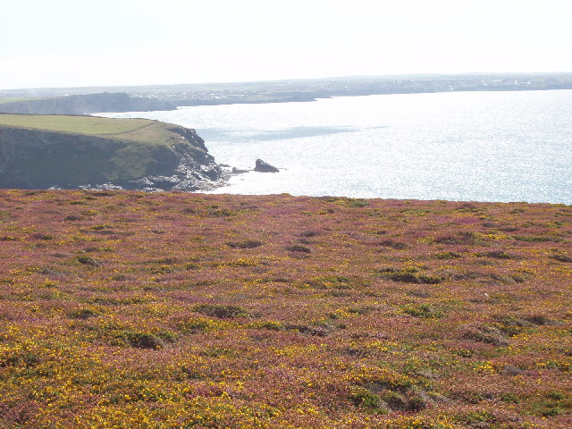 Cliff top shrubs at Trenance Point