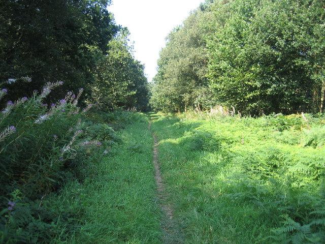 Hazel Hill Wood