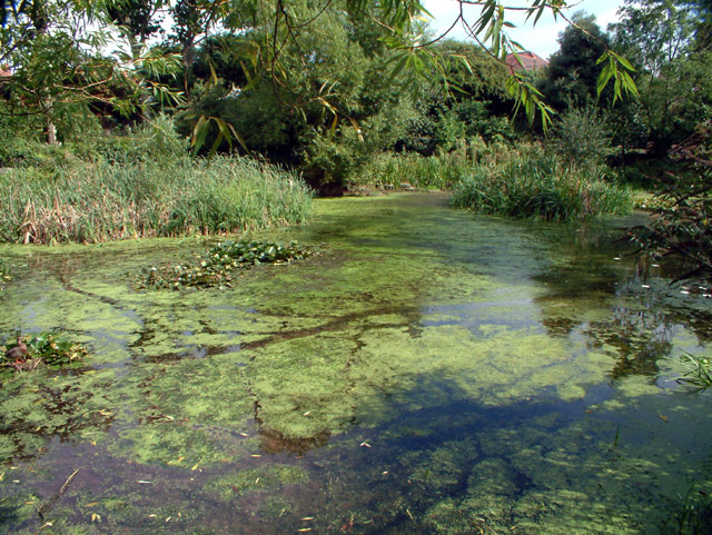 Beulah Hill Pond SE19