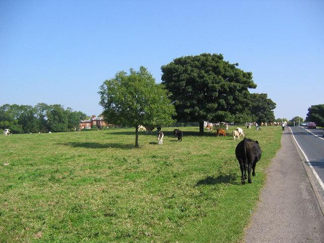 Beverley Pasture