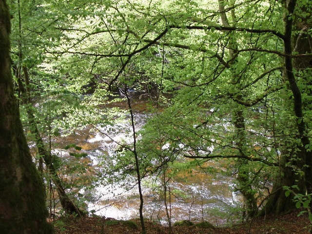 The River Braan