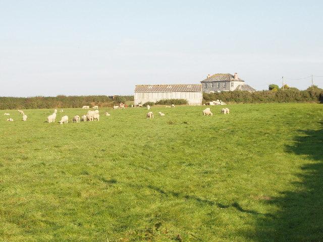 Tregidier farm and sheep near St Merryn