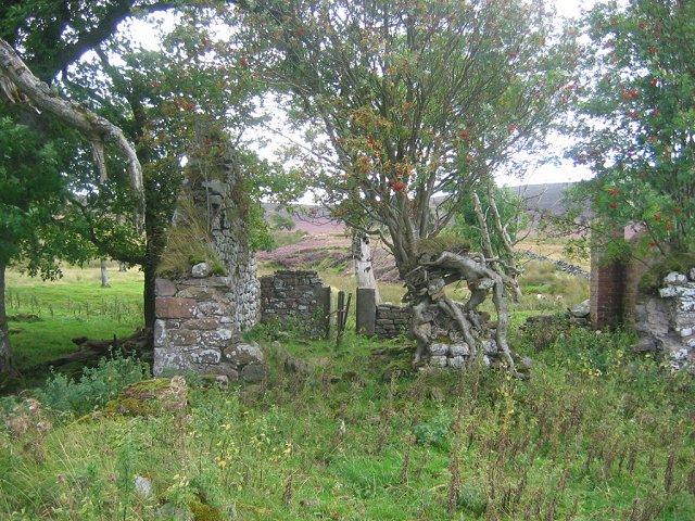 Rowan tree, Thrashiedean
