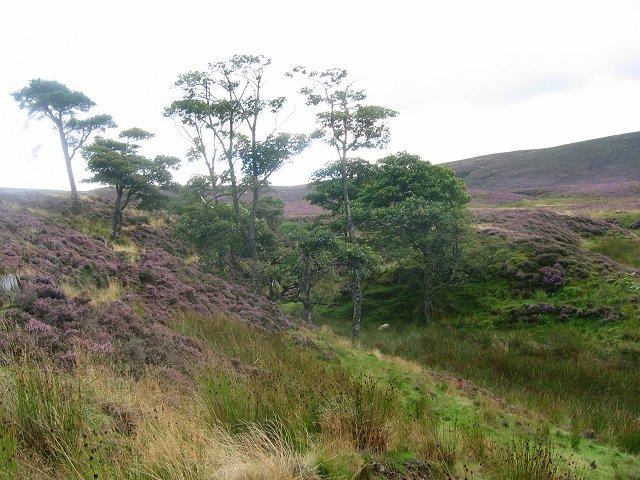 Thrashiedean Plantation.