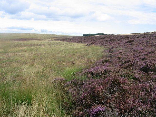 Moorland near Thrashiedean