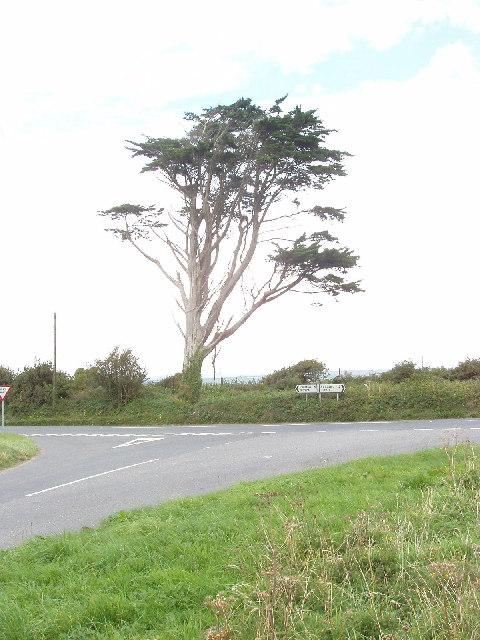 Lone cedar near Bogee farm