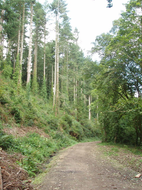 Bishop's Wood, by Polbrock Bridge