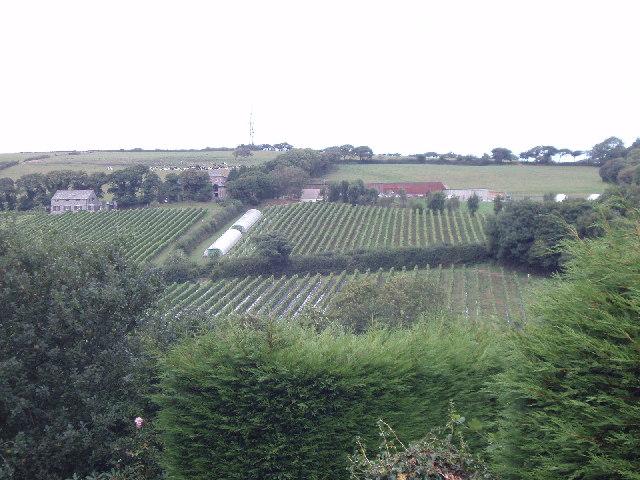 Camel Valley Vineyard, near Nanstallon