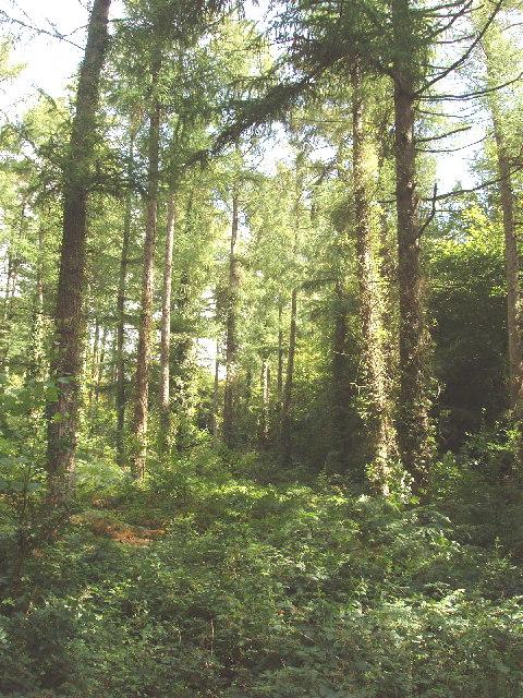 Pencarrow Wood