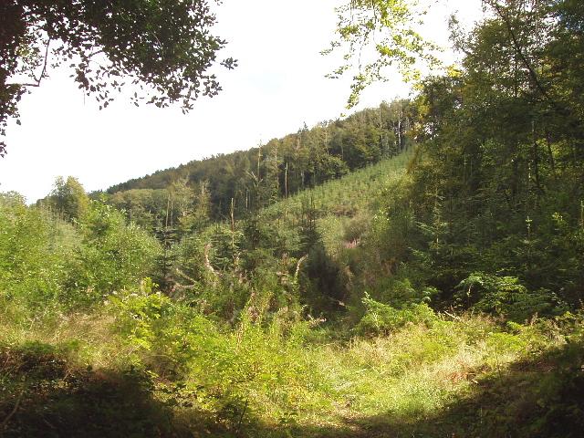 Lower Helland Wood