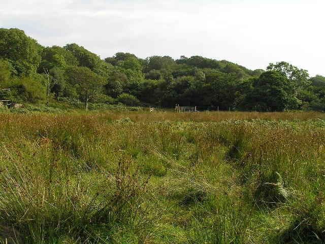 Marshland near Mains of Drimnin