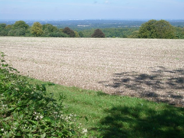 A field to the east of Staple Lane