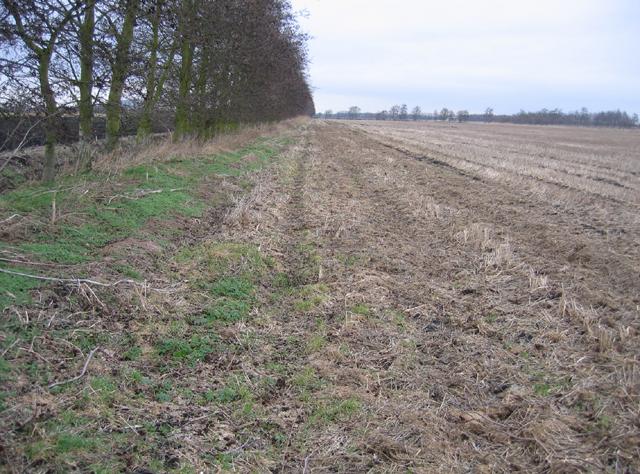 Farmland in Methwold Fens, West Norfolk