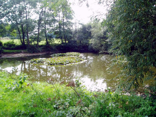 Pond near Black Ven farm