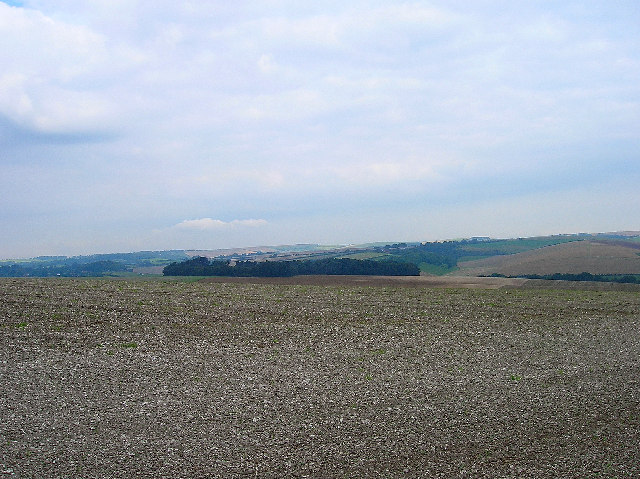 Cranedean Plantation, near Falmer