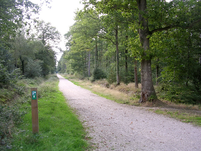 Off-road cycle route through the Busketts Lawn Inclosure, New Forest
