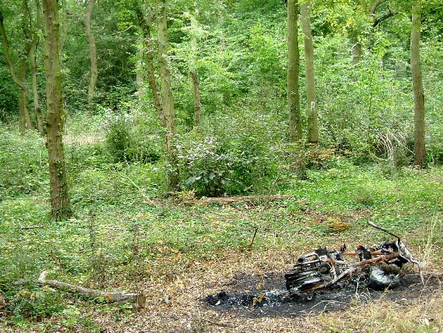 Brambles Bush & Burned out Bike