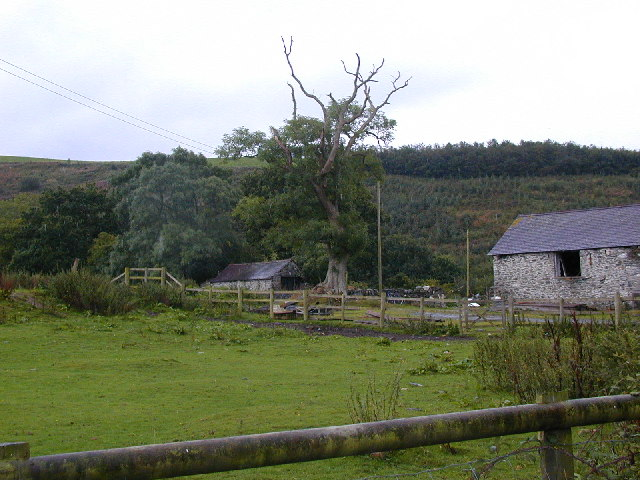 Old tree, old stone barns and young conifers.