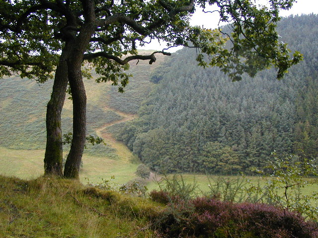 View across the valley of the Nant Cwmnewydion.