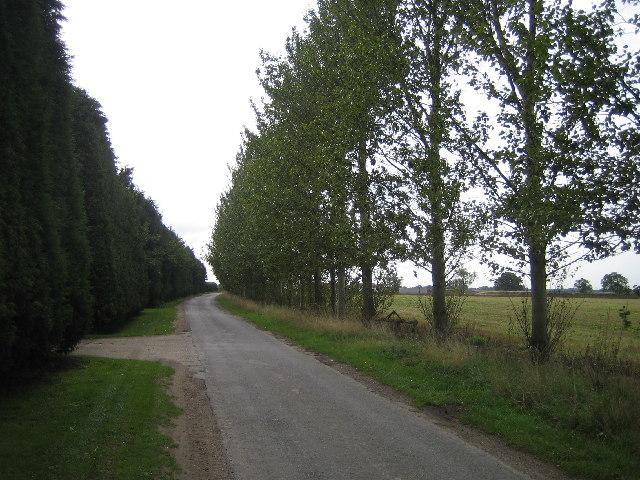 Tree lined road through Swinethorpe