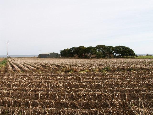 Boghall farm fields