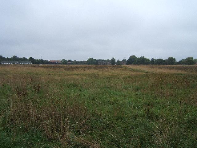Woodfield - Ashtead Common