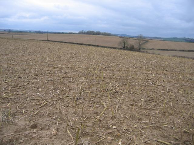 Farmland, Stinsford, Dorset