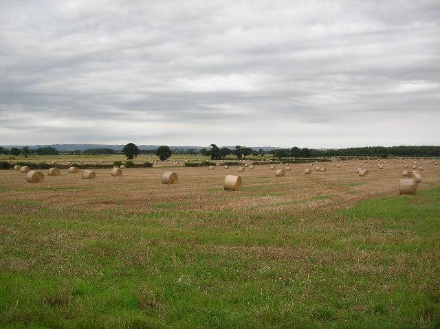 Farmland near Dunnington