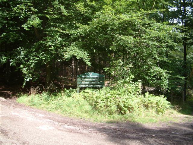 Greyhone Wood