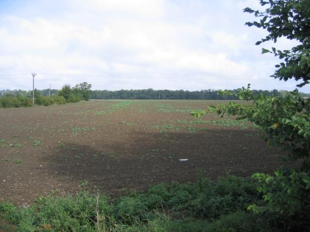 Farmland, New Wimpole, Cambs