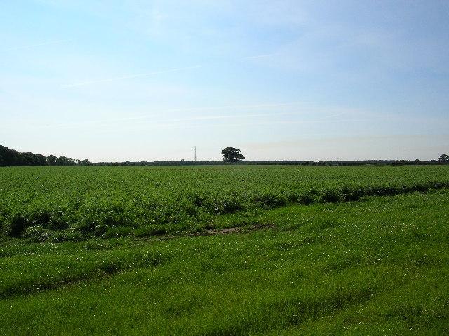 Farmland towards Elvington