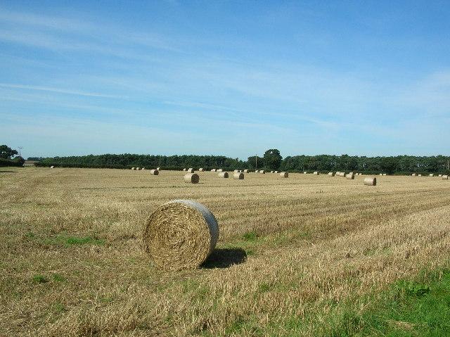 Straw Bales - Lime Field Farm