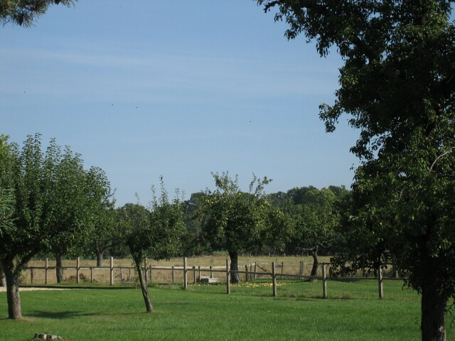 Orchard near Aston-sub-Edge