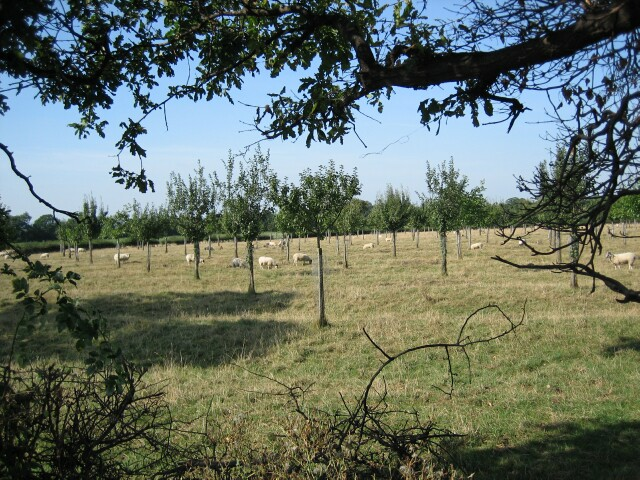 Orchard at Aston-sub-Edge