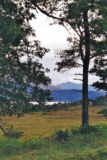 Woodland and heath, Blar Inbhir Scaddail
