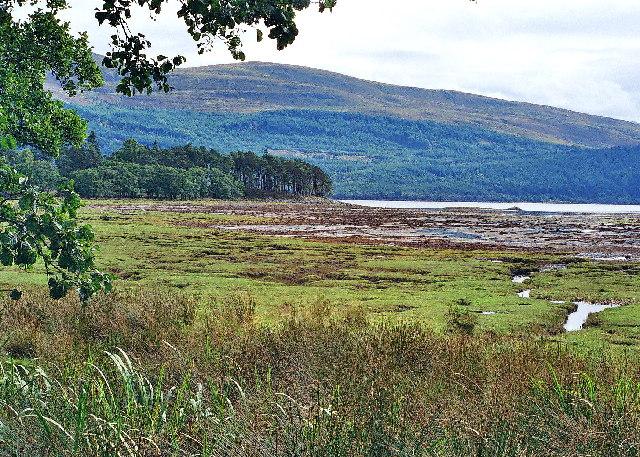 Salt marsh, N side of Inverscaddle Bay, Ardgour