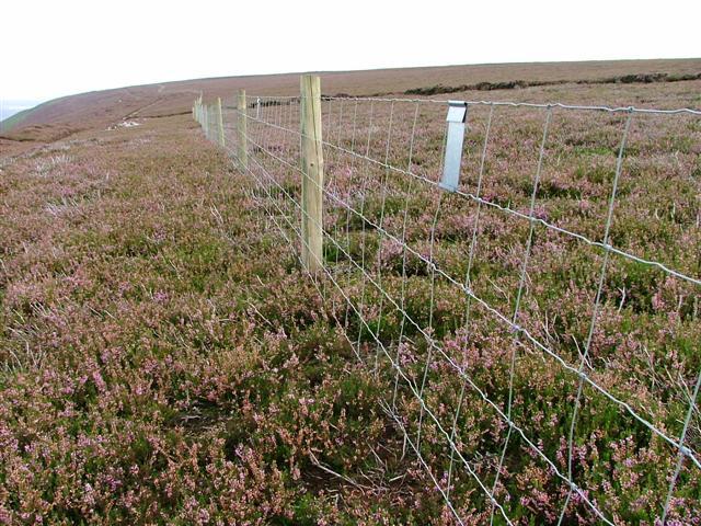 Fence, Arden Great Moor