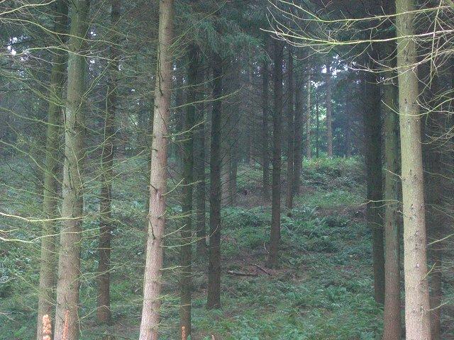 Barnhill Plantation.