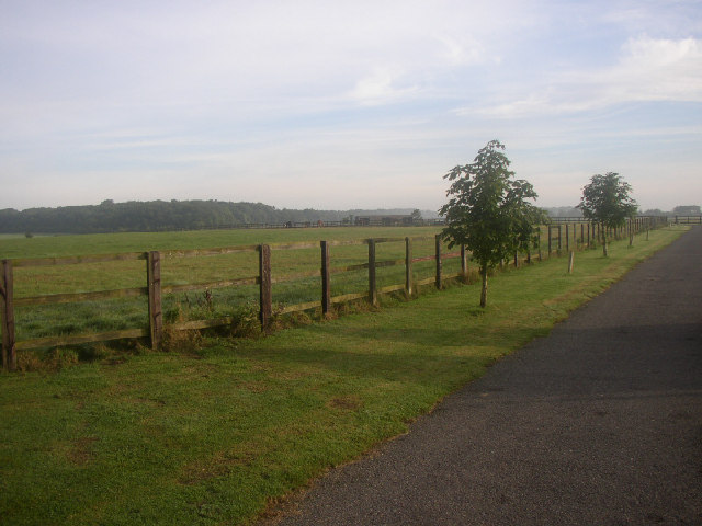 Basefield Wood