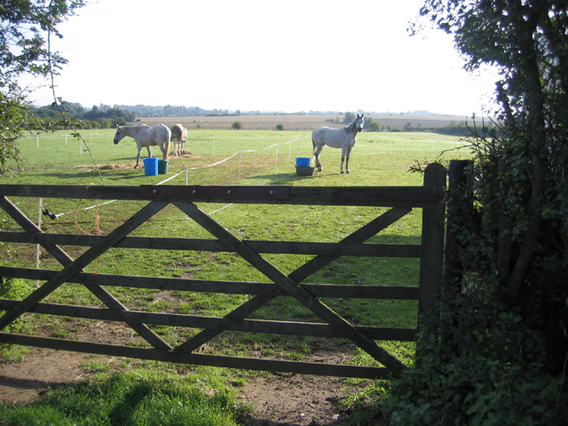Paddock with horses, Whittlesford, Cambs