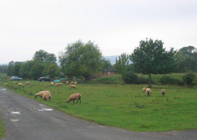 Brimfield Common