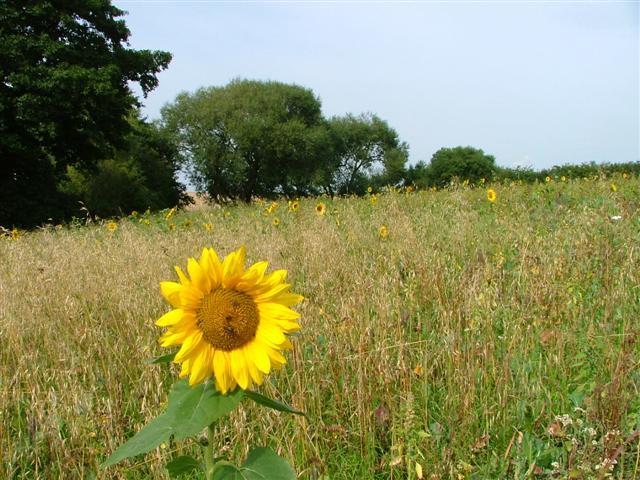 Environmental Stewardship, Green Lane, Tunstall