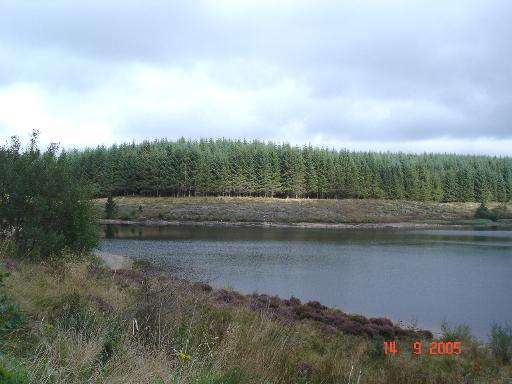 Forestry and Llyn Brenig