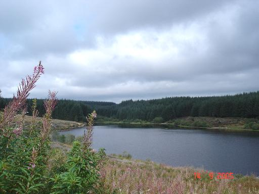 Llyn Brenig towards the Pont y Brenig